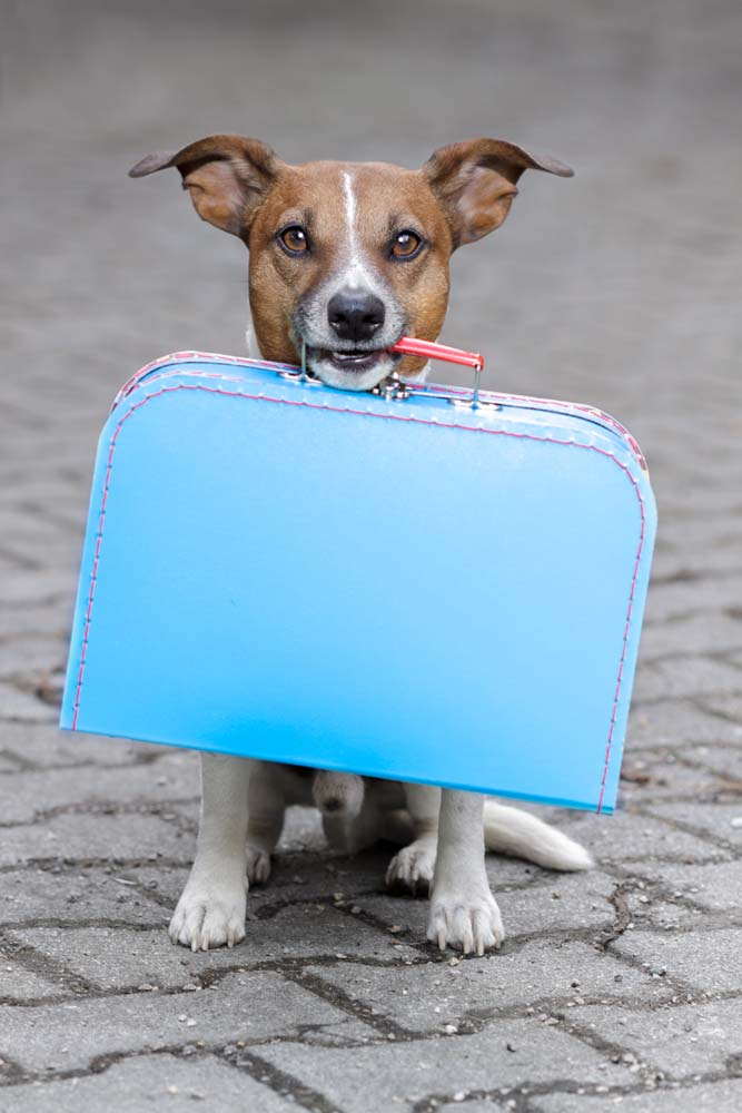 Coping With Baggage Complaints with Island Trader Vacations