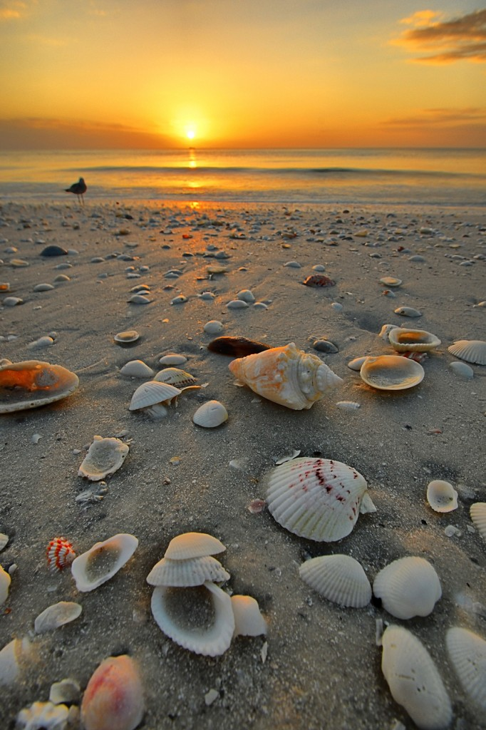 Island Trader Vacations Reviews St. Augustine an Exciting Destination in 2015